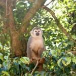 monkey-365795_1280